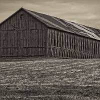 Connecticut Tobacco Barn Art Prints & Posters by Phil Cardamone