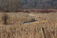 Early Spring Dunlap Marsh Colors