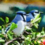 """""""Blue Jays"""" by LJdesigns"""