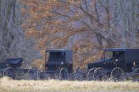 Amish Buggies 2