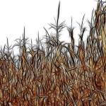"""""""Abstract of a Cornfield"""" by bloomingvinedesign"""