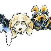Sleepy Cockapoos Art Prints & Posters by Off-Leash Art™