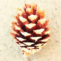 Bitty Pinecone