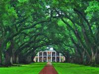I-1201 Oak Plantation - Umbrella of Trees - 18x24