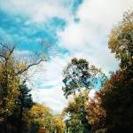 """autumn"" by packedlikesardines"