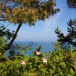 """""""Pine and flowers Diswallups NWR"""" by dgolden"""
