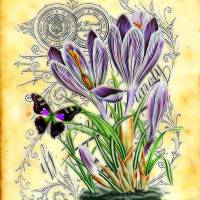 Crocus and butterfly Art Prints & Posters by Elizabeth Mix