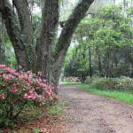 """Azalea Garden Path"" by Groecar"