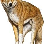 """""""Dingo"""" by inkart"""