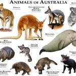 """Australia Animals"" by inkart"