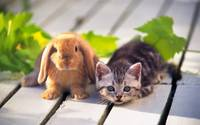 Kitten and Bunny Buddies