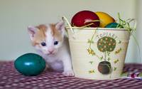 Kitten Peeks Behind Easter Eggs Basket