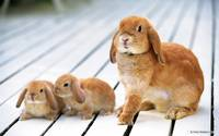 Floppy Eared Mamma Bunny and Her Fluffy Babies