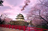 Chinese Castle And Cherry Blossoms