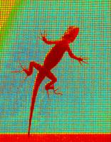 Lizard on the Screen - Up