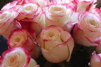 Bouquet of Pink and White Roses