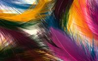 Colorful Feathers Abstract