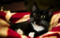 Cute Kitty Whiskers Tuxedo Cat