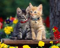 Your Collar Has A Bell And Mine Does Not Kittens