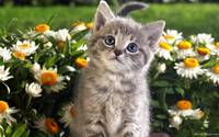 Love Me Forever Grey Tabby Kitten