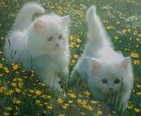 White Kittens On The Hunt