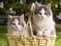 Two Kittens In A Wicker Basket