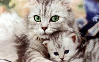 I Will Always Protect You, Mama Cat And Kitten
