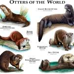 """otters"" by inkart"