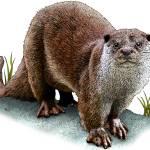 """""""european_otter"""" by inkart"""