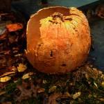 The Pumpkin Shell