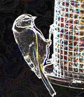 Abstract Photograph - Blue Tit on a Feeder