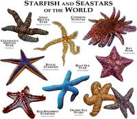 Starfish and Seastars of the World