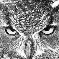 Wildlife-Images Art Prints & Posters by Jackie Popp