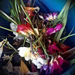 """Spring decay"" by PersonalAndSingular"