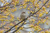 Sparrow in a Tree