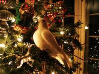 Partridge on a Christmas Tree