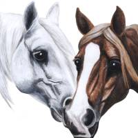stallion and mare Art Prints & Posters by Jane (Jinx) Tellam