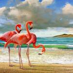 """flamingos on the beach"" by rchristophervest"