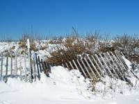 Snow Fence on Dune in Winter