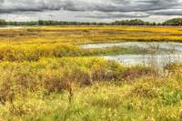 Bombay Hook Salt Marsh - Delaware