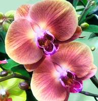 2014 orchids violetgreen 1B camproductionschristin