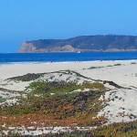 """""""Coronado - Beach - 12 x 20"""" by RDRiccoboni"""