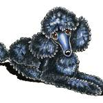 """Black Miniature Poodle Lay Pretty"" by OffLeashArt"