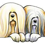 """Lhasa Apso Pair"" by OffLeashArt"