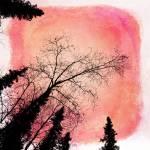 """""""Tree silhouettes I"""" by Piri"""