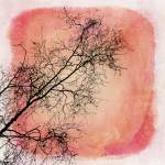 """tree silhouettes II"" by Piri"