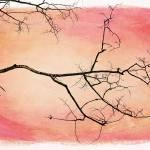 """tree silhouettes III"" by Piri"