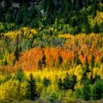 """""""Aspen Forest"""" by kinnikinnickarts"""