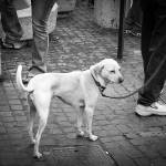 """Rome street dog (1 of 1)"" by 10thMusePhotography"