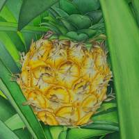 Minature Pineapple Art Prints & Posters by Joel Carlson